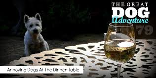 dogs at dinner table gda79 annoying dogs at the dinner table ferndog training