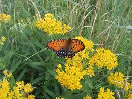 pollinators of native plants five ways native plants enrich the environment dyck arboretum