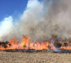 Colorado Wildfire Risk Assessment Portal by Wildland Fire Management