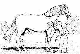 296 dessins de coloriage cheval à imprimer sur laguerche com page 12