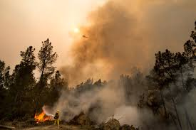 Wildfire California 2016 by 100 Million Dead Trees In California Add Fuel To Wildfire Debate