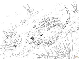coloring mouse coloring pages