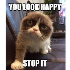 Ugly Cat Meme - 104 best grumpy cat images on pinterest grumpy cat kitty cats