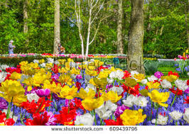 flower bed stock images royalty free images u0026 vectors shutterstock