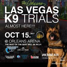 belgian sheepdog rescue texas vegas shepherd rescue vsr helps protect and rescue the german