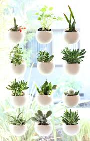 Small Desk Plants Small Desk Plants New On Small Space House Plant Display Ideas