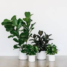 Modern Houseplants by Peacock U0026 Co
