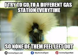 Funny Bird Memes - funny bird meme png