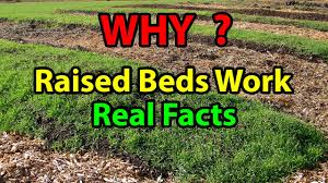 Raised Gardens For Beginners - why raised bed gardening works faster building beds for organic