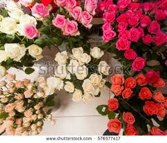Roses For Sale Selling Roses Stock Images Royalty Free Images U0026 Vectors