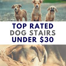 the top rated pet steps for small dogs under 30 dog stairs and