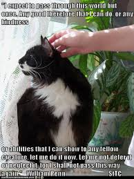 Sexy Cat Meme - 112 best sexy cat images on pinterest funny animals funny