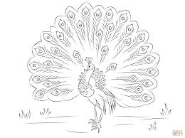 beautiful peacock coloring page free printable coloring pages