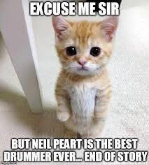 The Best Cat Memes - cute cat meme imgflip