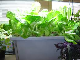 benefit of hydroponic gardening in day to day u0027s life