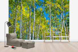 trembling aspen trees wall mural photo wallpaper photowall