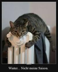 s e katzen spr che katzen sprüche bnbnews co cats cat animal and