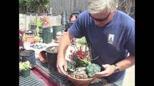how to make a succulent dish garden in 5 minutes youtube