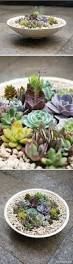succulents are like dogs they require less effort than most