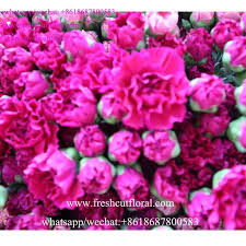 Wholesale Flowers 156 Best 18687800583 Freshcutfloral Wholesale The Preserved Fresh