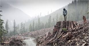 last tree embracing treeless worlds kiša lala