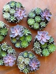 succulent arrangements cottage flavor pretty succulent arrangements