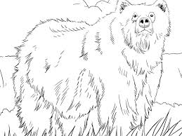 download bear color pages ziho coloring