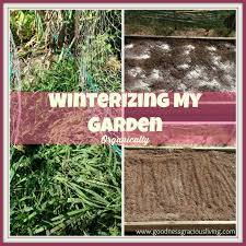 winterizing my garden organically goodness gracious living