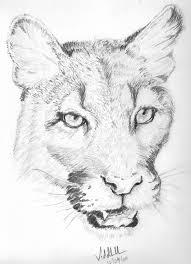 animal sketches pencil