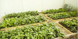 how to start a vegetable garden 开垦新菜园 youtube