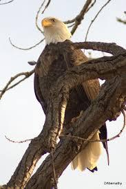 Kansas wild animals images 562 best kansas images kansas kansas usa and jpg