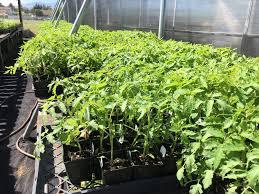 native plants extension master gardener master gardener spring sales will start your garden off right uc