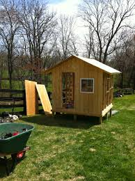 a writer u0027s rush my backyard chickens coop building and hawk attacks