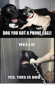 Telephone Meme - dog you got a phone call hello yes this is dog weknowmemes