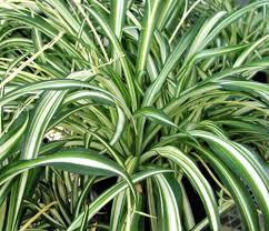 aloe aloe 10 great air purifying plants eluxe magazine