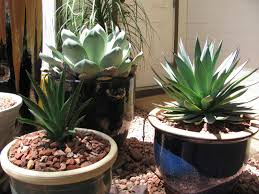 gritty mix for outdoor potted plants