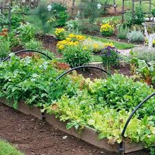 19 best vegetable garden ideas images on pinterest vegetables