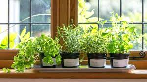 Ideas For Herb Garden Indoor Herb Garden Ideas And Easy Indoor Herb Garden Ideas