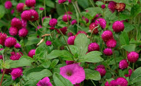 Flowering Shrubs That Like Full Sun - 15 deer resistant plants fine gardening