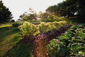 the vegetable garden thomas jefferson u0027s monticello