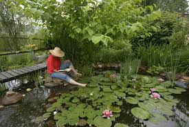 6 upcycled garden ponds you can make this weekend