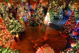 charlie brown christmas lights williamsport s charlie brown christmas filled with decorated trees
