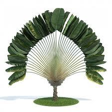 3d ornamental tropical plant cgtrader