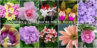 imagenes impactantes que os gustara imágenes y cuidados de mis 10 flores preferidas plantas
