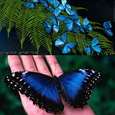 Blue And Green Butterfly - blue morpho butterfly save our green