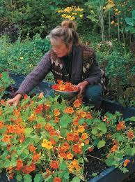 edible flowers enliven a garden vegetable gardener
