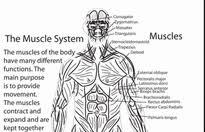 Human Anatomy Worksheet Understanding The Human Body 5th Grade Worksheets Education Com