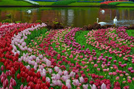 Beauty Garden by Swans Tag Wallpapers Lake Birds Nature Swans New Wallpapers Four