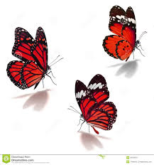 three red monarch butterfly stock image image 54289091