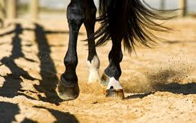 Signs Of Blindness In Horses Why Horses Stumble Thehorse Com